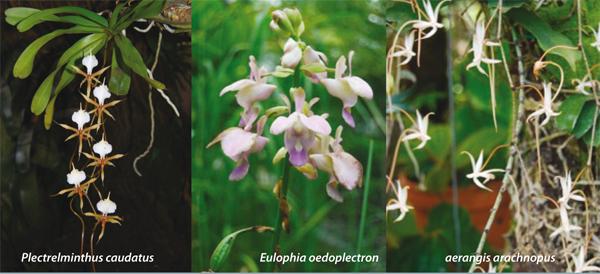 Différents types d'Orchidées