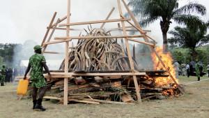 Ecogarde veillant à la destruction d'ivoire à la Cité de la Démocratie.